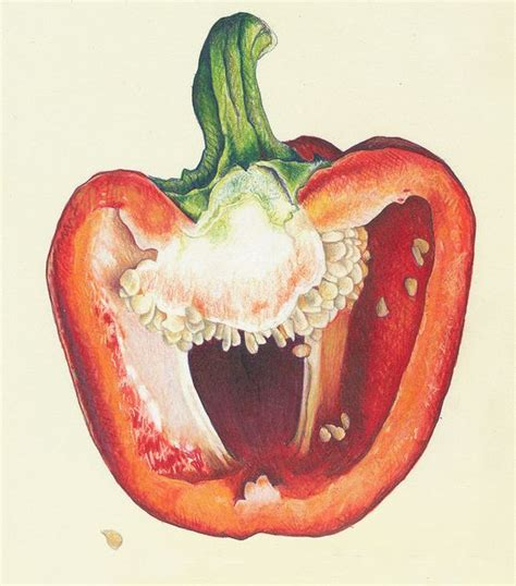 Food Drawing Pen Pencil Makanan Harga 42 best images about observation drawings fruits and