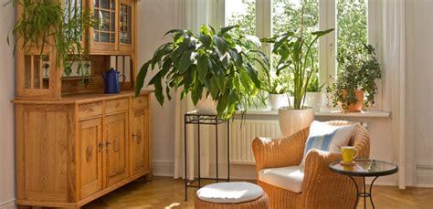 come curare le piante d appartamento curare le piante in casa carrefour