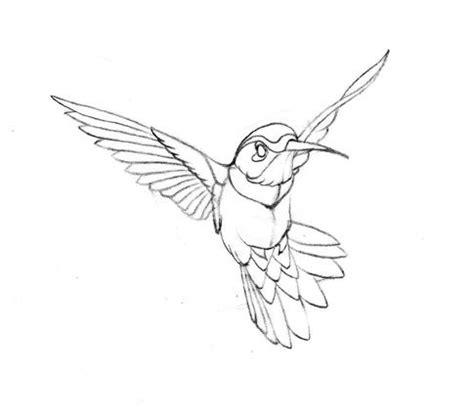 Hummingbird Outline by Flying Hummingbird Drawing Hummingbird Hummingbirds Grey And Watercolour