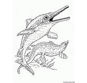 Coloring Page  Ichthyosaur And Plesiosaur