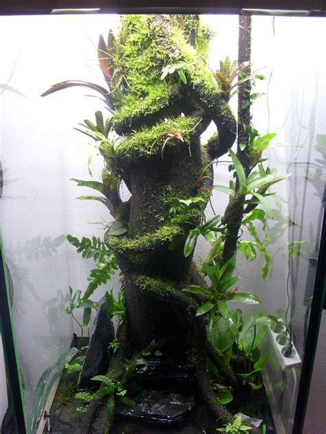frog terrarium ideas  pinterest vivarium
