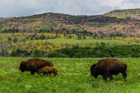 spring in the wichita mountains wildlife refuge in