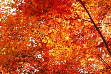30 most beautiful images of autumn leaves for you