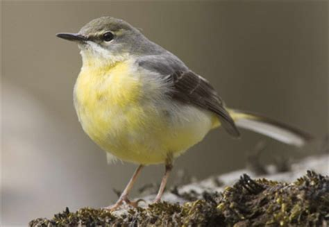 birdtrends 2013: trends in numbers, breeding success and