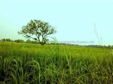 download mp3 xpdc hijau bumi tuhan sinarmawaddah indahnya hijau bumi tuhan