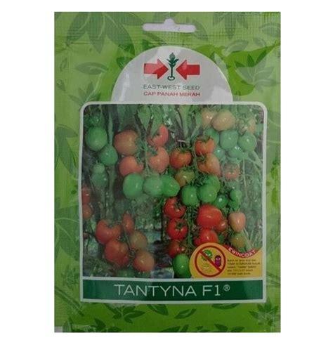 Benih Tomat Harga Per 1 Sachet benih tomat tantyna f1 1 750 biji panah merah bibitbunga