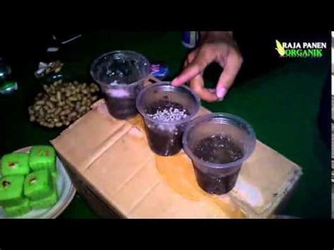 Harga Pupuk Organik Cair Di Grow cara efektif efisien pemupukan tanaman cabai doovi