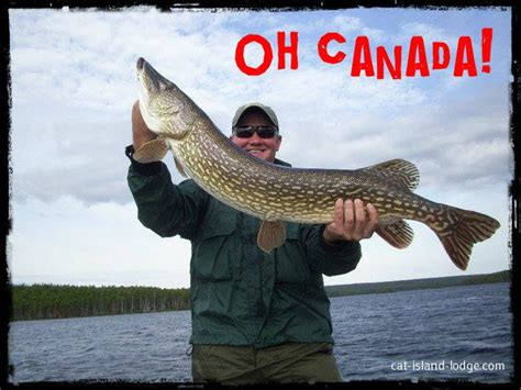 Pike Meme - trophy northern pike caught on a canadian fly in fishing