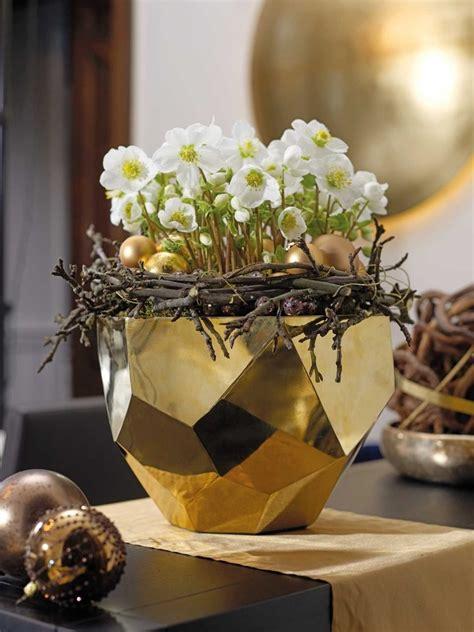 christrosen kaufen helleborus niger verboom beauty