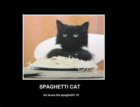 Spaghetti Meme - image 15316 spaghetti cat know your meme