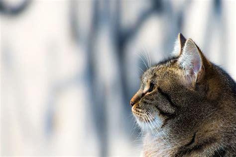 como se aparean los animales con humanos c 243 mo pasaron los gatos de felinos salvajes a animales