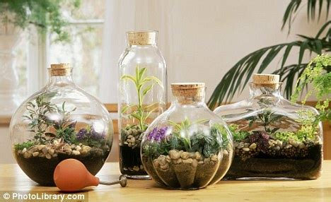 Läuse Im Garten 3980 by Glass Act Bottled Gardens Make Pretty Projects When It S