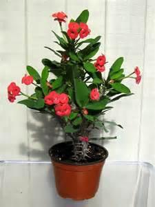 best indoor plants for your home best houseplants for