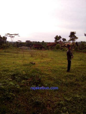 Minyak Nilam Sulawesi Selatan jual pabrik penyulingan minyak nilam di batang jawa tengah