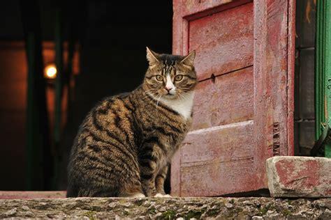 porta gatto gatto e porta perch 233 se 232 fuori vuole entrare e viceversa