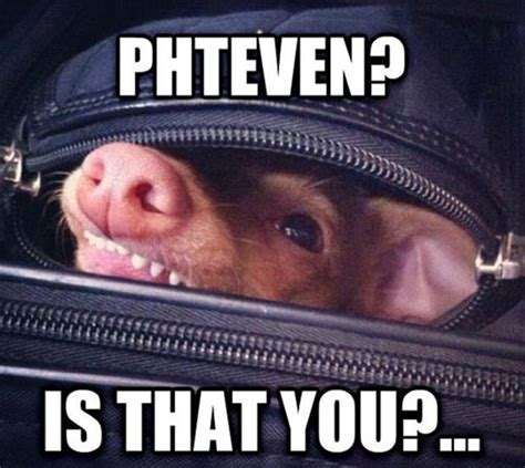 Phteven Meme - phteven dump a day