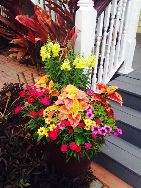 plants  container gardens  budget diet