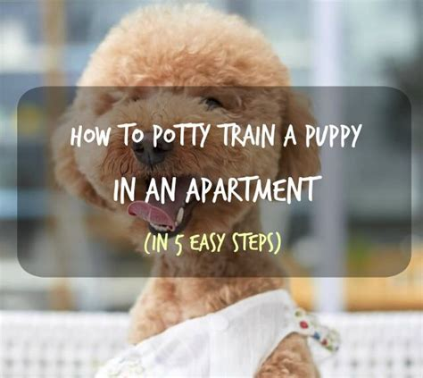how to potty a puppy in an apartment here s how to potty a puppy in an apartment in 5 easy steps