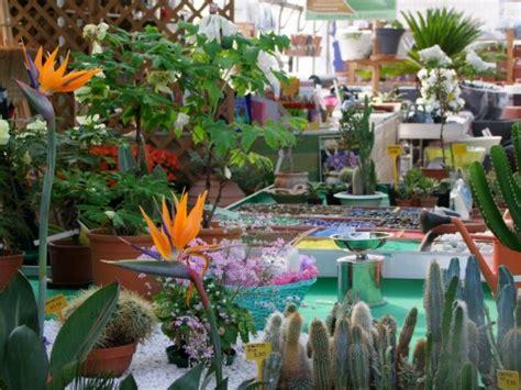 terrazze fiorite foto hotel r best hotel deal site