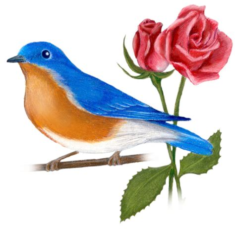 new york state bird and flower eastern bluebird sialia