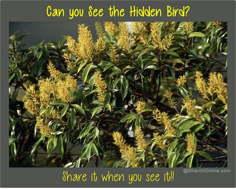Find In The Picture Riddle Find The Bird Among Leaves
