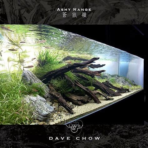 design aquascape online 17 best images about freshwater aquascaping on pinterest