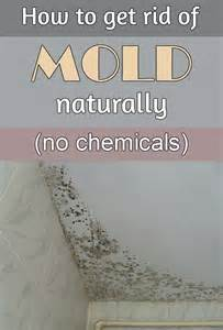 how to get rid musty smell in basement mold smell in house to get rid of cool get rid of musty