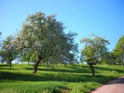 small trees for backyard small trees for a small yard or garden trees under