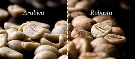Coffee Robusta types of coffee beans explained