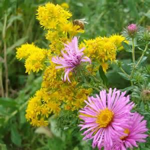 midwest gardening putting pretty perennials to work
