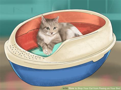 Stop Cat From On Bed by How To Stop Cat From On Bed How To Prevent Your Cat From