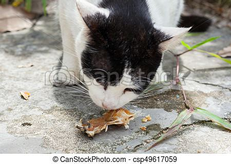 dog not eating thailand stock photo 202319899 shutterstock stray cats eat fish bones in thailand stock images