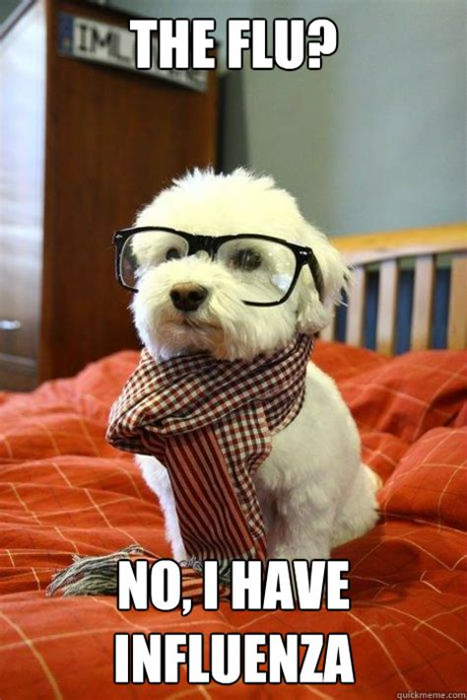 Hipster Dog Meme - the flu no i have influenza hipster dog quickmeme