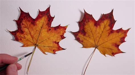 Drawing Leaves by Autumn Leaves Drawings Www Pixshark Images