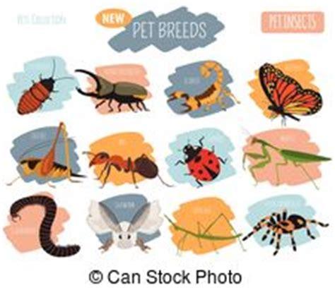 insetti appartamento appartamento animali insetti pericoloso illustrazione