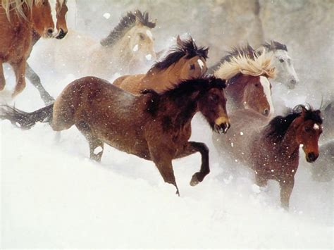 httpzoofilia mujer ensartada por caballo mujer cogiendo con pony new style for 2016 2017