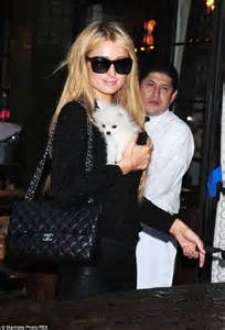 betty s teacup yorkies calgary looks flawless in chanel with nicky and 13 000 pomeranian