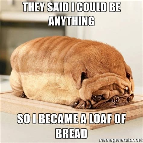 pug loaf of bread they said i could be anything so i became a loaf of bread pug loaf meme generator