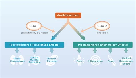 Where Is 2 cox 1 2 inhibition nsaid pictures to pin on