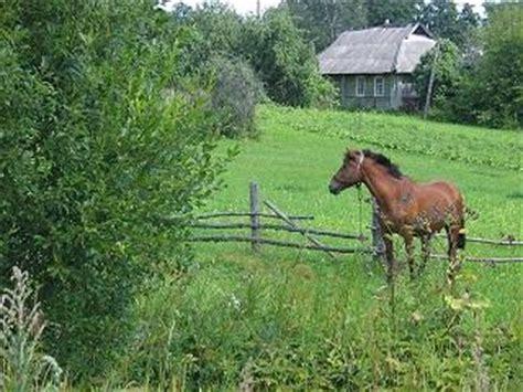 pferde suchen ein zuhause pferde in not pferde suchen ein zuhause vermittlung pferden markt de
