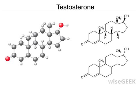 testosterone definition of testosterone by medical what is the free androgen index with pictures