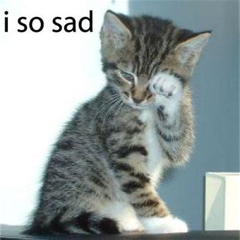 Sad Kitty Meme - i so sad cat meme cat planet cat planet