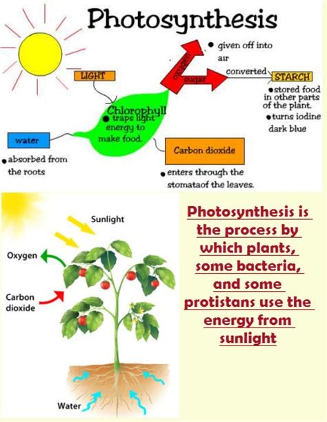 plant life cycle worksheet 4th grade science olympiad