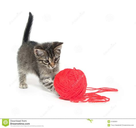 Cute Tabby Kitten Playing With Yarn Stock Image   Image