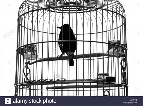 Bird In A Cage a silhouette of one bird in a cage hong kong stock photo