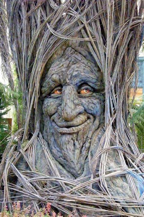 tree face funny tree image funny tree face face of tree image of