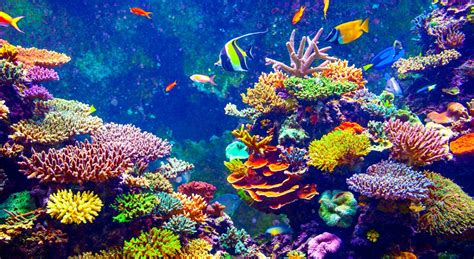Coral Reef L by Is Sunscreen Killing Our Coral Reefs National Geographic