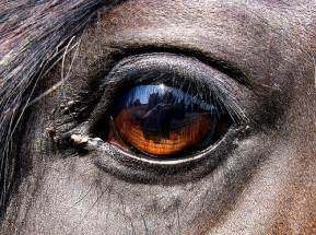 How To Draw A Map horse eye aad flickr