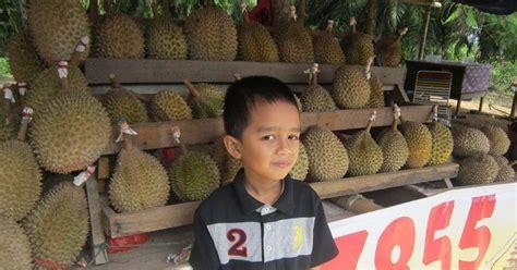 durian musang king  bentong terbaik