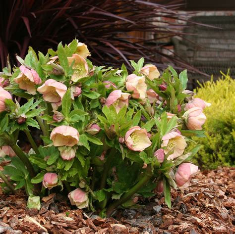 Flower Plants For Garden Top Landscape Plants Excerpts From Experts Coast Gardening